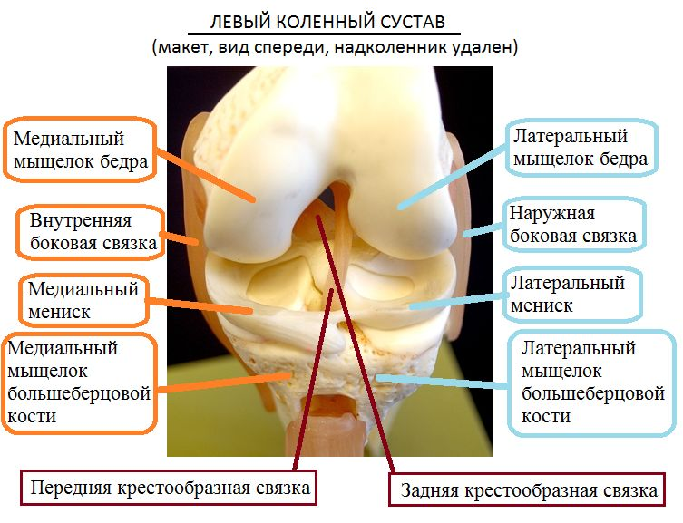 Боковой мениск коленного сустава снять воспаление в коленном суставе народными средствами